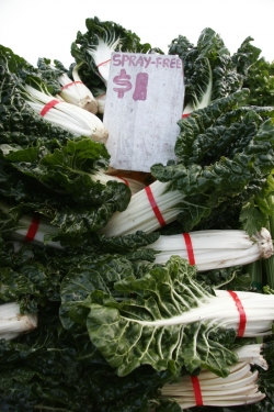 Farmers' markets are a great place to find affordable organic food © Betty Shepherd