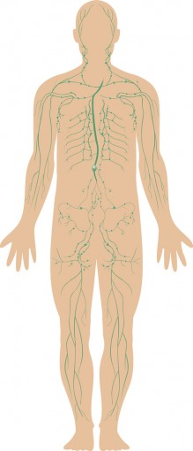Lymphatic vessels and lymph nodes are located throughout the body. © Matthew Cole / Fotolia