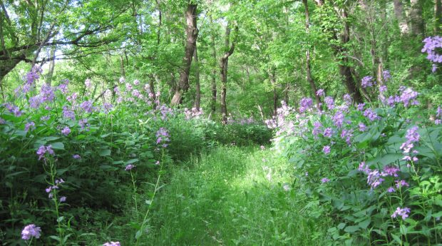 Spring—When Running Dreams Bloom Anew