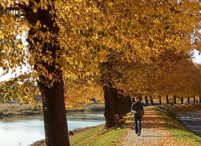 Cold Autumn Weather? Good Reasons to Run Anyway