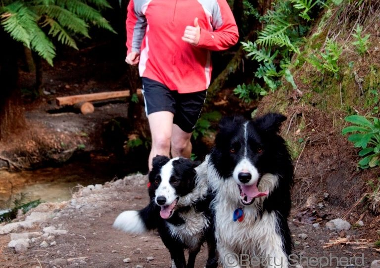 Running with Dogs—Man and Animal in Partnership