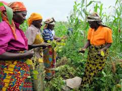 Women work cooperatively to raise crops. © Courtesy of PeopleWeaver